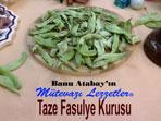Taze Fasulye Kurusu (görsel)